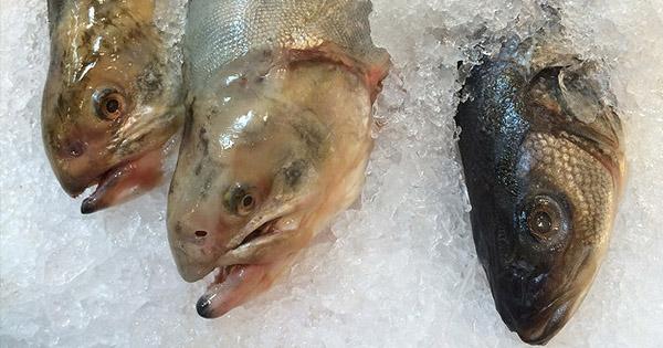 Ryby a omega-3 mastné kyseliny
